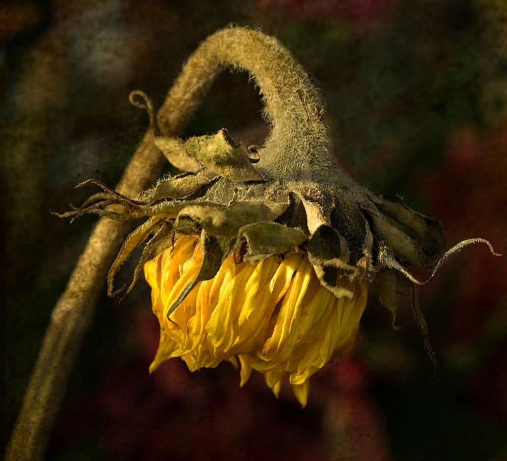 Flowers shutting their sweet eyes in timely sleep